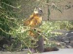 Snacking Marmot