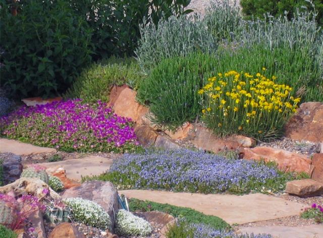 Delosperma-Veronica-in-xeric-garden-CC